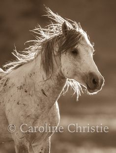 I travel throughout America to different locations where wild horses roam free. I love to be in the rugged high mountain desert of the Sand