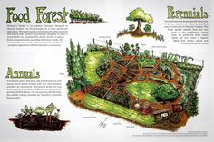 Food Forest - credits at bottom of image