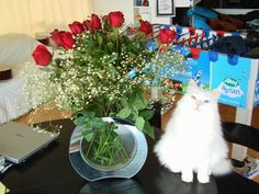 KT with red roses Green Eyes, Cool Cats, Red Roses