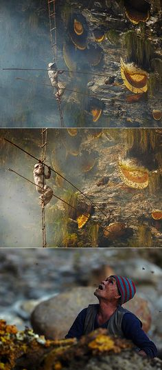 Yowza! Twice a year, the Gurung tribe in central Nepal goes on a honey hunting expedition where they risk their lives to harvest honey from the world's largest honeybee. It's one of the tribe's oldest, proudest and most dangerous traditions that have been passed down through generations.