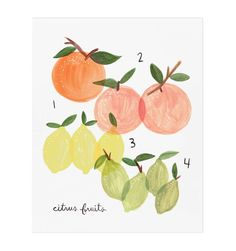 Citrus Art Print by RIFLE PAPER Co. | Made in USA