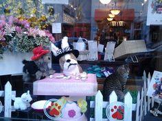 No tea  4 kitty - window display, pet store, walnut st.