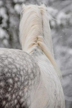 Beautiful horse in winter.