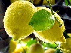 Lemone'