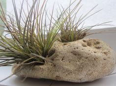Hag Stone witches stone holey rock from ocean by UpwardOverTheMtn, $15.00 Air Plants, Indoor Plants, Hag Stones, Sea Witch, Eye Stone, Kitchen Witch, Pottery Ideas, Vintage Gifts, Witches