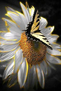 Beautiful Bugs, Beautiful Butterflies, Animals Beautiful, Beautiful Flowers, Flower Background Wallpaper, Butterfly Wallpaper, Flower Backgrounds, Butterfly Painting, Butterfly Flowers