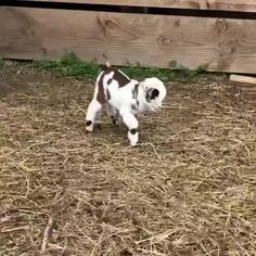 Baby goat still figuring out the whole walking thing - Animals wild, Animals cutest, Animals funny, Animals drawings Baby Animal Videos, Funny Animal Videos, Baby Videos, Dog Videos, Cute Little Animals, Cute Funny Animals, Cute Goats, Funny Goats, Mini Goats