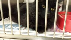 At Tazewell County Animal Control - not GEORGE