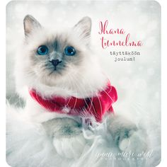 Tuotteet   Page 5 of 19   Tervetuloa verkkokauppaan   Anna-Mari West Photography Cats, Christmas, Anna, Animals, Photography, Xmas, Gatos, Animales, Photograph