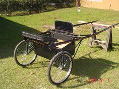 Show Horse Pleasure Cart Horse Carriage Pleasure driving carriage Hernando, Florida