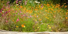 How to create a wildflower meadow in your garden- Eden Project, Cornwall
