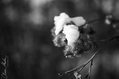 #Winter in #black and #white... #part 3 ...// © Oliver Haaker // www.haaker.photo //