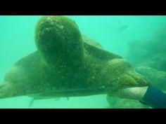 Pattaya, Thailand: Chinesische Touristin stirbt beim Seawalking   traveLink.