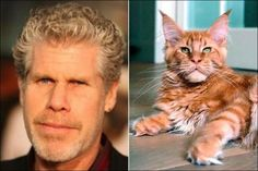 11 Cats Who Look Exactly Like Famous Celebrities