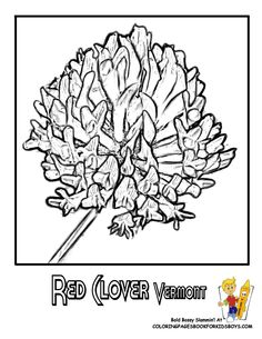 images of state flowers coloring pages google search