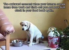 66 Ideas funny animals memes awkward moments lol for 2019 Funny Puppy Memes, Funny Animal Memes, Cute Funny Animals, Funny Animal Pictures, Funny Cute, Funny Dogs, Funny Puppies, Funny Humor, Puppy Jokes