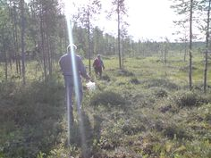 Berry picking with local people