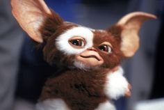 Writer Chris Columbus has finished the script for 'Gremlins the third entry in the series. He hints that Gizmo might not survive. Gremlins Gizmo, Cyberpunk, Kingston, Funko Shop, Chris Columbus, Indiana Jones, Cult, Batman, Arts And Crafts