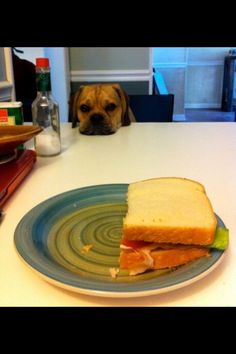 Lunch date #puggle
