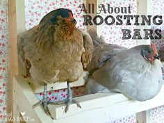 All about bars in your chicken coop.