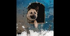 Dogs, cats and other companion animals are not equipped to handle the cold. Keep Animals Safe and Warm This Winter
