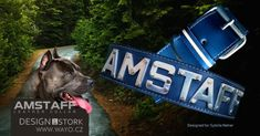 Kožený obojek Amstaff Sybille :: Design by Stork Collar Designs, Leather Dog Collars, Stork, Dogs, Doggies, Pet Dogs, Dog