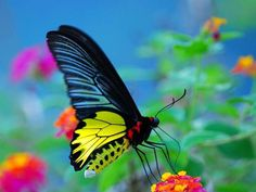 butterfly beauty
