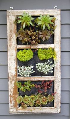 Beautiful variety of succulents are included in the vertical garden. I have several old pix & window frames, Right up my alley! Just awesome!!