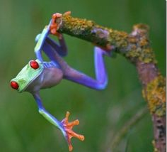 Beautiful Frogs! Click To Enlarge!