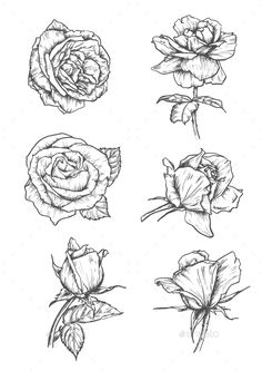 Floral flower drawing black and white illustration pinterest flower sketch emblems mightylinksfo