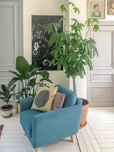 Dietemiet: Zo hou je je kamerplanten in topvorm