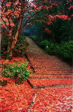 Leaf covered stairs on the path to Muro-ji Temple #ridecolorfully#katespadeny#vespa.