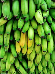 Plantains are #food staple in Costa Rica.  Fry with green to make delicious salty patacones.   Pinned by Costa Rican chef Chris www.4tulemar.com