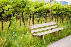 Winiarnia w Południowym Tyrolu <3