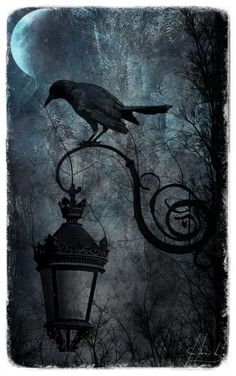 Ворона / Декупаж / Картинки для декупажа