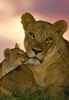 Mama & Cub