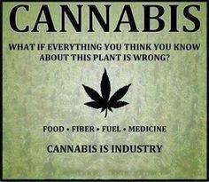 Cannabis is God's Gift