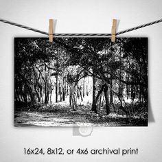 Black and White Photos forest art nature prints fine art photography give for hikers north carolina wall art trees outdoors by CoastalFocusArt   5.00 USD Black and white fine art photography of a forest scene near Carolina Beach North Carolina. Each print is produced on award-winning Kodak Professional Endura Premier Paper with a glossy or matte finish so that you always receive the longest lasting and highest quality print possible using the finest photo processing equipment NOT A HOME…