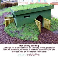Bunnies can get so much from this sturdy bunny shelter - protection, two entrances/exits for quickness and they can eat the roof!
