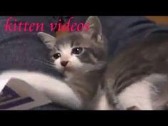かわいい子猫動画&猫画像♪猫ニャーゴyoutube,Cat Video,Cats and kittens  funny cats videos,Cats and Kittens 猫のミャミチャンが♂猫に生まれ変わって帰ってきました♪ 名前はもちろんミャミ雄君!