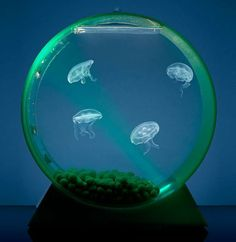 It may best be described as living art: a hypnotizing lava lamp of graceful jellyfish gliding effortlessly through colorful waters backlit by a full-spectrum of LED lights.  Dad will be impressed by this Father's Day gift!