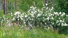Wonderful Summerday ~ Flower Meadow, birds singing, wind blowing
