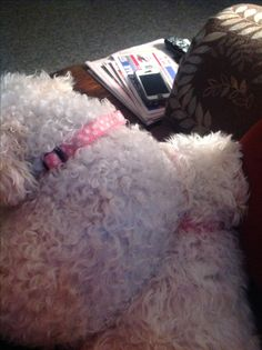 Snowball and Snowflake Pet Sitting, Snowball, Snowflakes, Pets, Animals, Animals And Pets, Animales, Pet Care, Snow Flakes