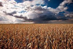 Corn field in Nebraska (by Elwood Photo)