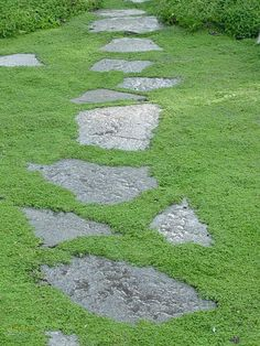Irish Moss (Sagina subulata) & stones - Which Plants to Use as Lawn Alternative : Home Improvement : DIY Network