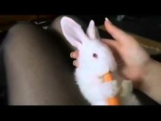 Funny Animal Videos - Cute Funny Animals