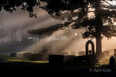 Frankfort Cemetery in early morning fog.  Frankfort, KY