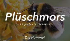 21 sehr plattdeutsche Worte, die alle außerhalb Norddeutschlands verwirren