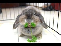 ▶ Funny And Cute Bunny Rabbit Videos Compilation 2014 [NEW] - YouTube