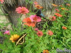 La vida puede ser un vuelo lleno de colores, aunque las perspectivas siempre serán distintas!  2011 © Septiembre